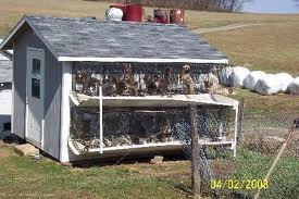 Auctions In Ohio >> The Puppy Mill Project – Amish Puppy Mills