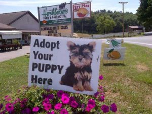 Adopt your Puppy Photo