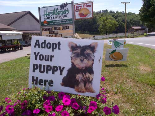 The Puppy Mill Project Amish Puppy Mills