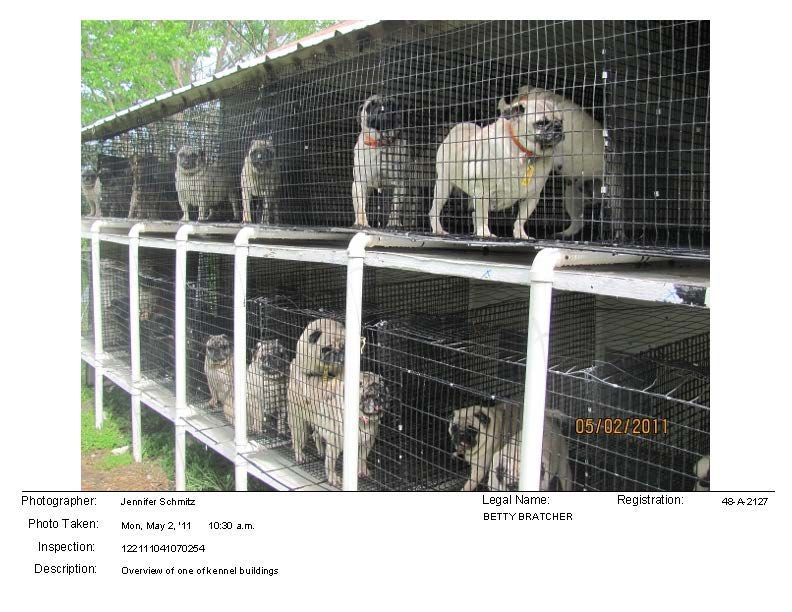 The Puppy Mill Project – Puppy Mill