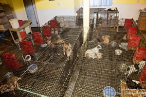 The Puppy Mill Project – Puppy Mill FAQs